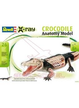 Maqueta cocodrilo colección X-Ray