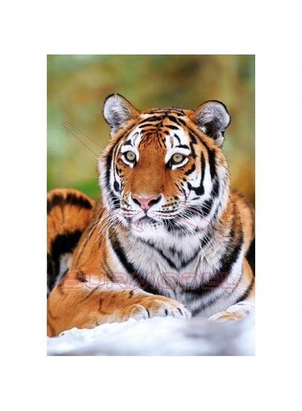 Puzzle tigre siberiano 500 piezas