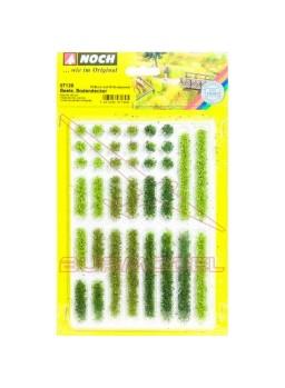 Conjunto de plantas herbaceas