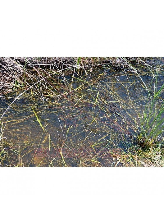 Still water 250ml Series Diorama AK-interactive