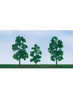 Árbol Sicamoro 9-10 cm (2 unidades)