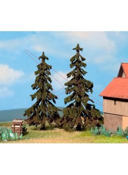 Conífera Picea de 120 y 130mm (2uds)