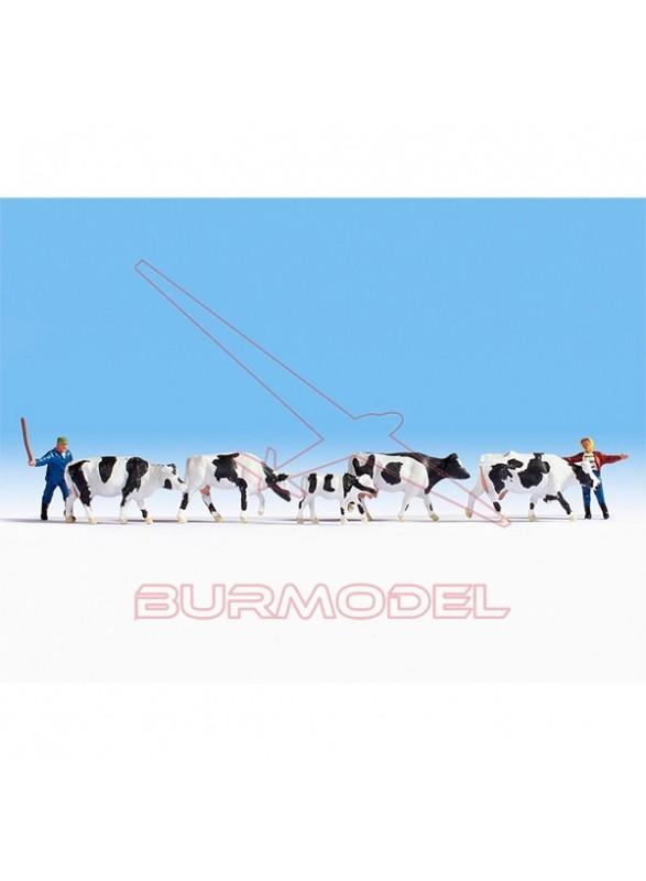 Pack vacas y pastores HO NOCH
